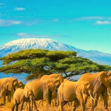 Top 10 Travel Destinations in Africa